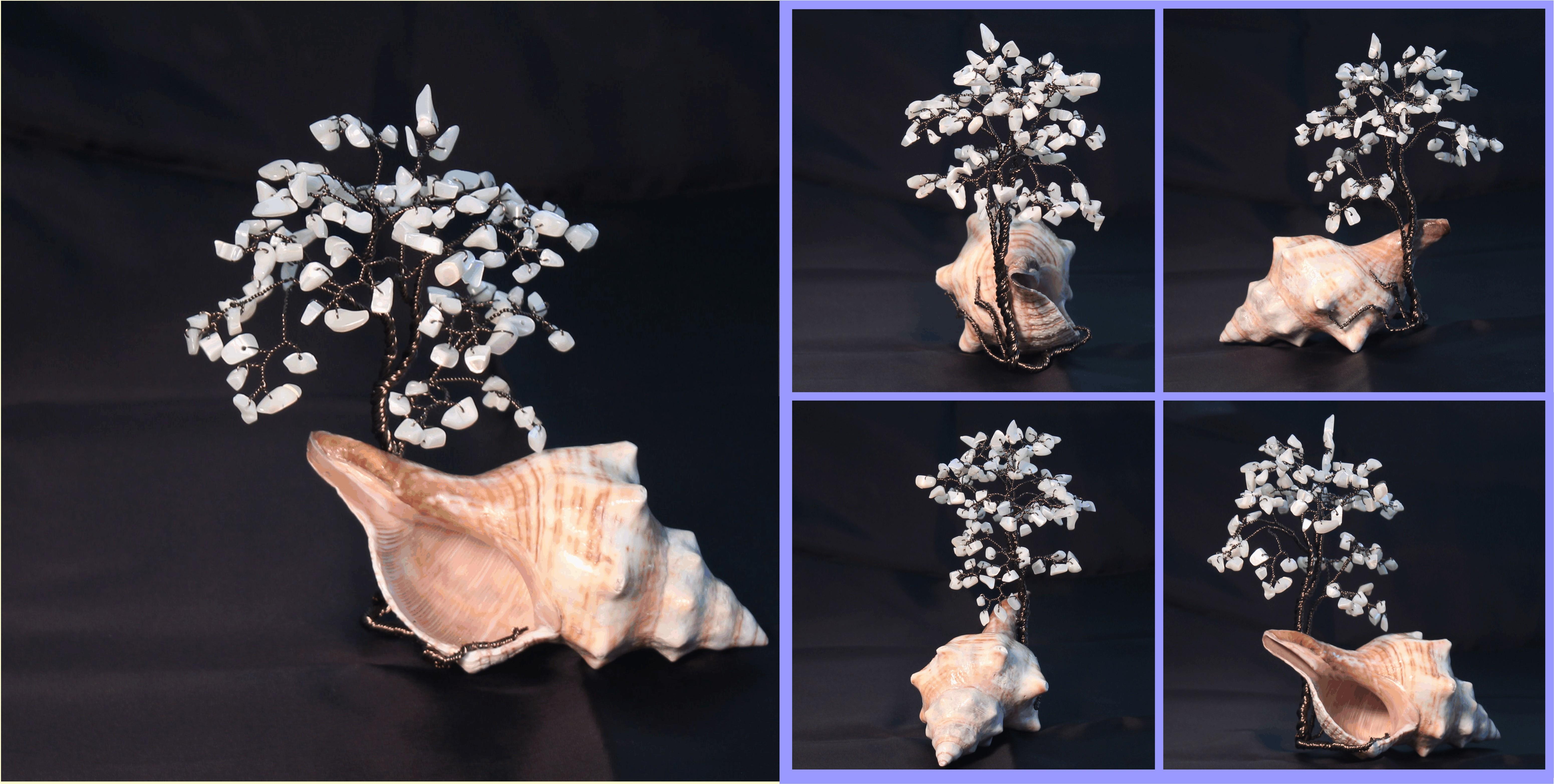 MOP on Seashell 1